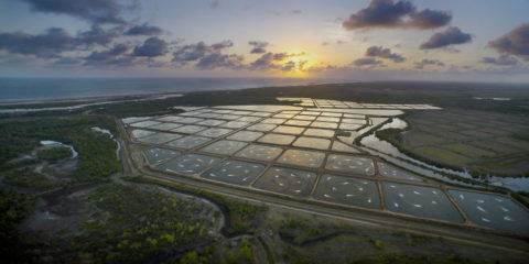 Reliable Aeration Supports Growth and Sustainability at Pacific Reef Fishery