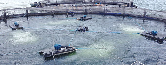 Aquaculture Aeration Systems